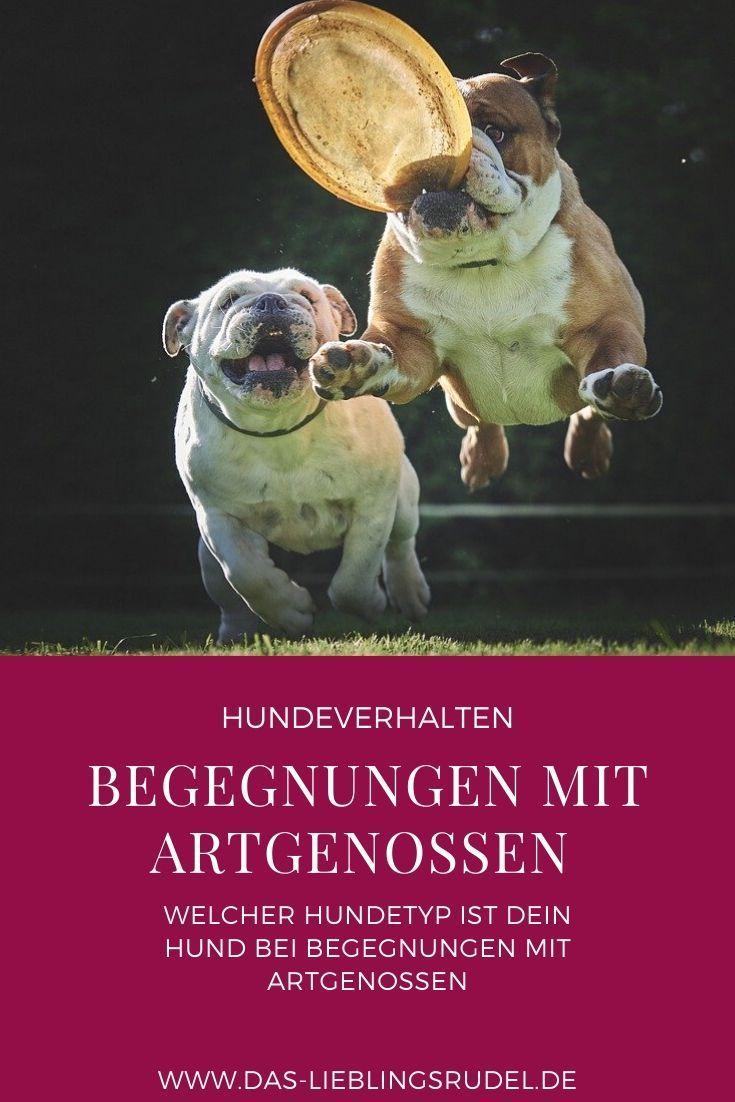 Pin auf Körpersprache und Kommunikation bei Hunden