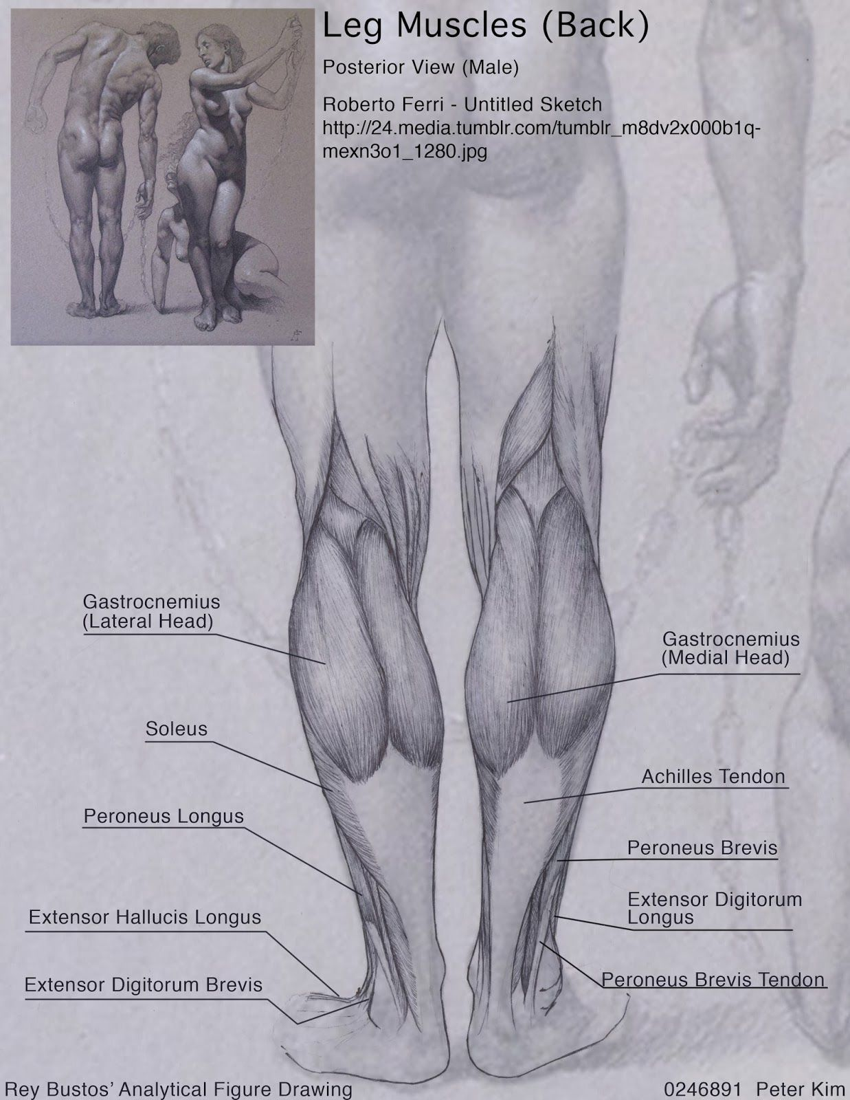 Pin by A J on Anatomy for Artists - Lower Body   Pinterest   Gross ...