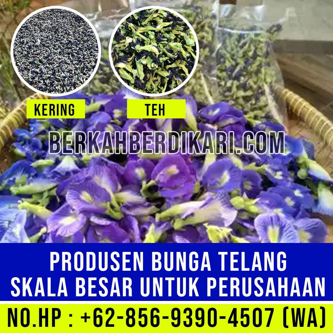 Pabrik Teh Bunga Telang Skala Besar Perusahaan Bunga Telang Kering Hub 62 856 9390 4507 Wa Penjual Bunga Bunga Pot Bunga