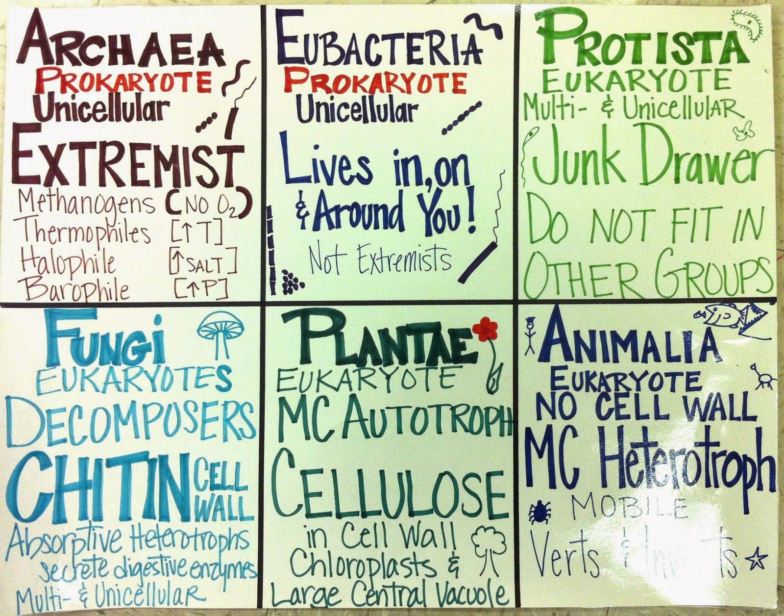 Neat Acidsbases Poster 6th Grade Science