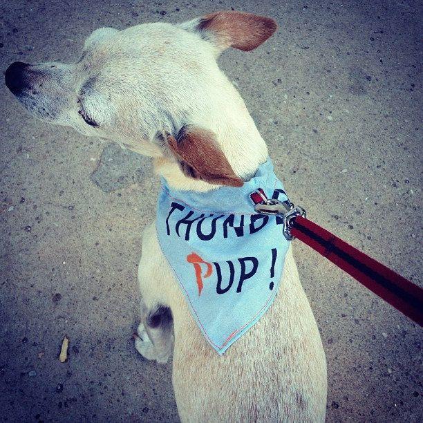 Thunder Pup Dog Bandanas Okc Thunder Inspired Dog Bandana