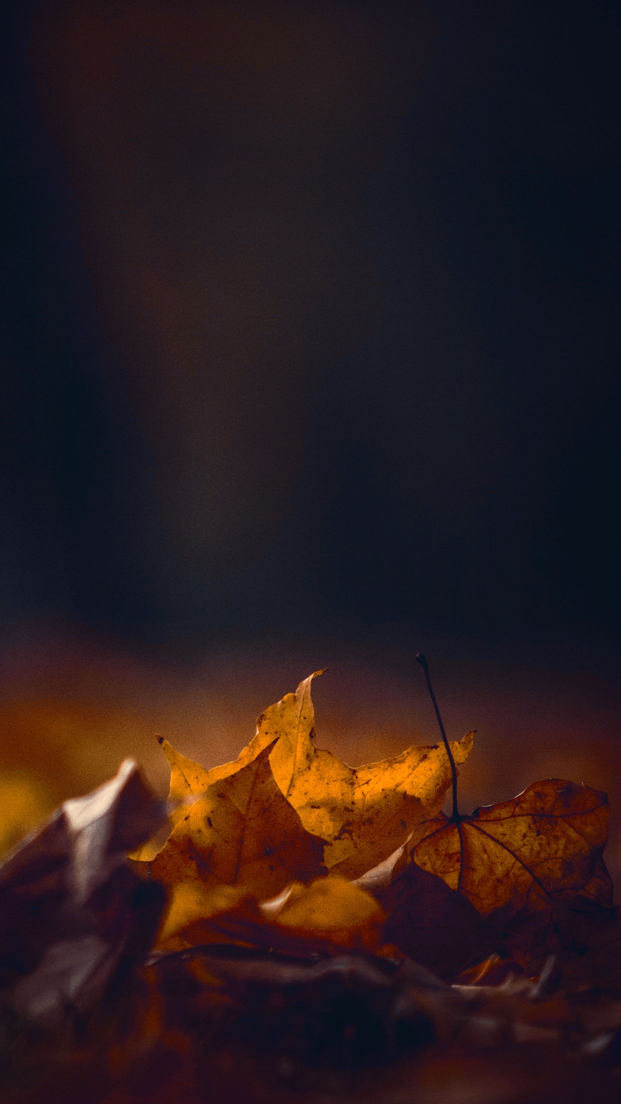 Hd Autumn Wallpaper For Your Phone Iphone Backgrounds Nature Phone Wallpaper Phone Wallpapers Tumblr
