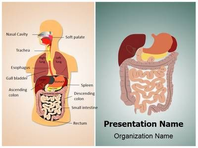 Digestive system powerpoint presentation template is one of the digestive system powerpoint presentation template is one of the best medical powerpoint templates by editabletemplates toneelgroepblik Choice Image