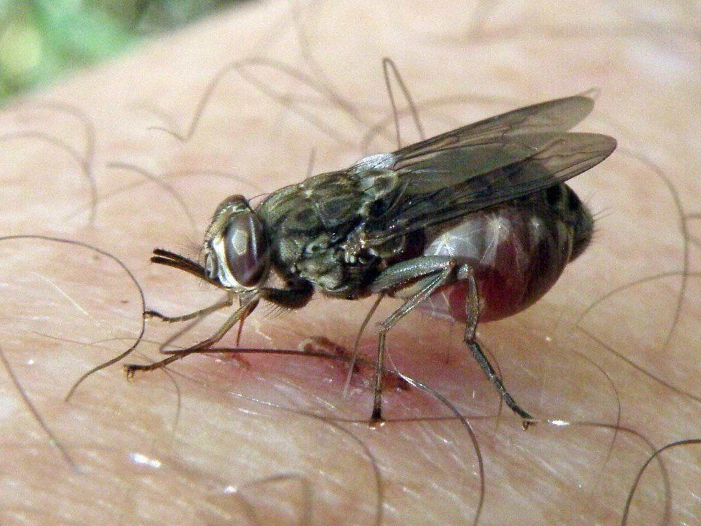 voici comment faire fuir les araign es les moustiques et les insectes les araign es le. Black Bedroom Furniture Sets. Home Design Ideas