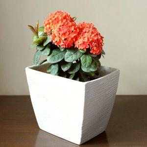 Flowering Plants Planting Flowers