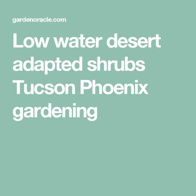 Low Water Desert Adapted Shrubs Tucson Phoenix Gardening