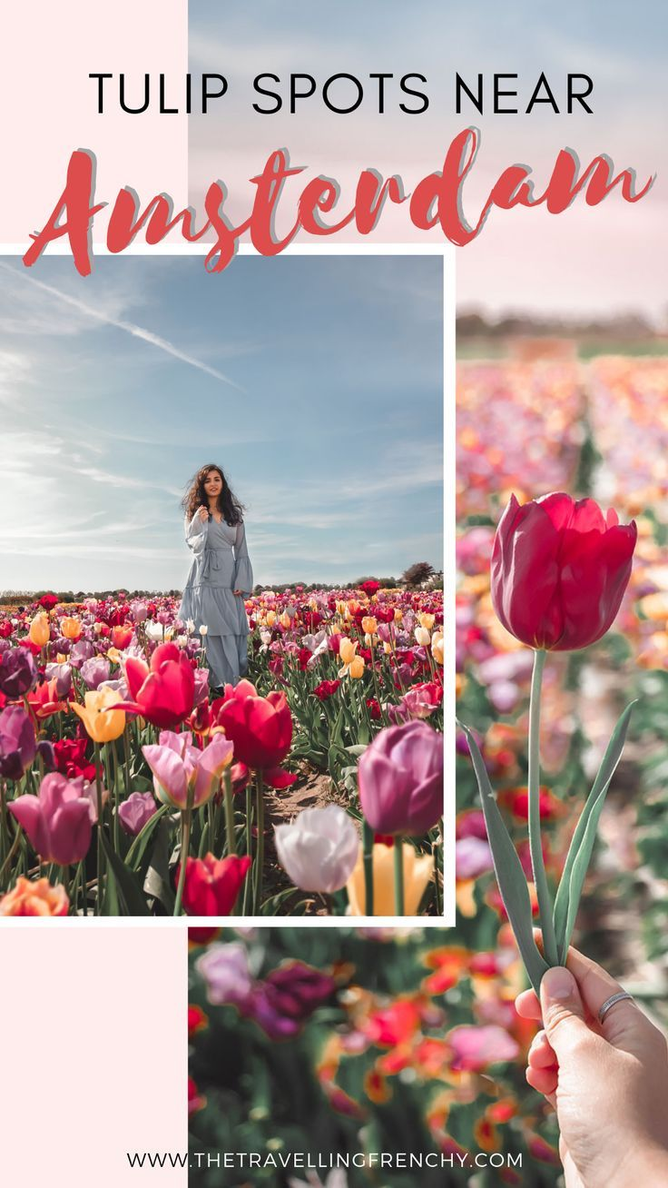 Where to See Tulips Near Amsterdam Travel, Travel