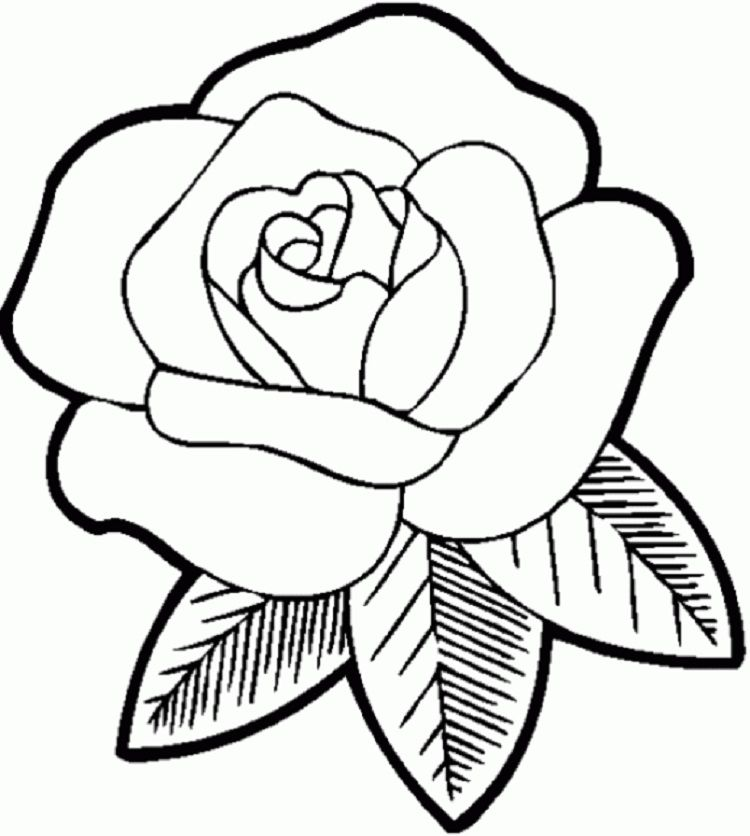 Rose Flower Coloring Pages Printable Portraits