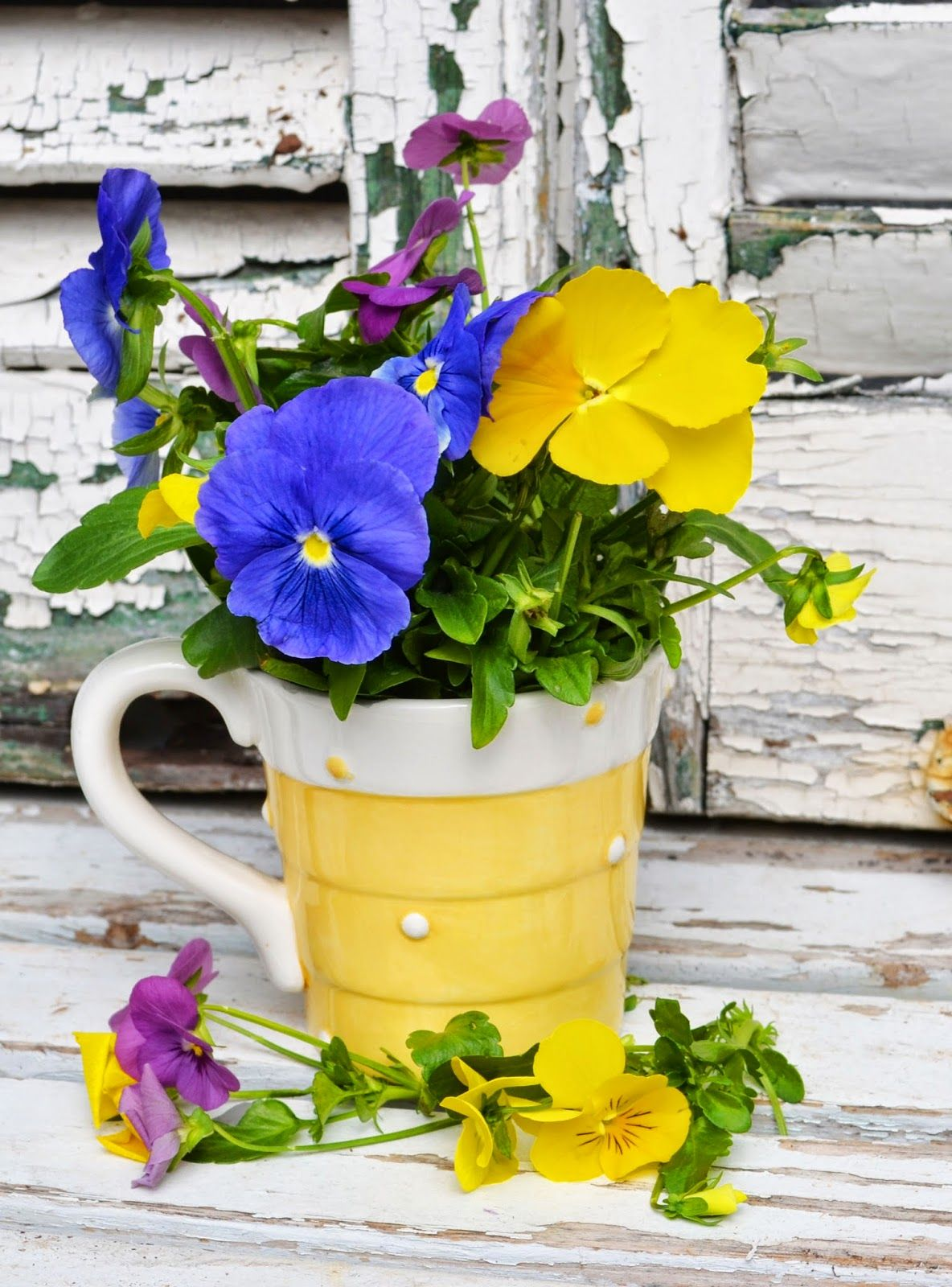 My Painted Garden Pansies And Tea Cup Flowers Pansies Flowers Beautiful Rose Flowers Pansies