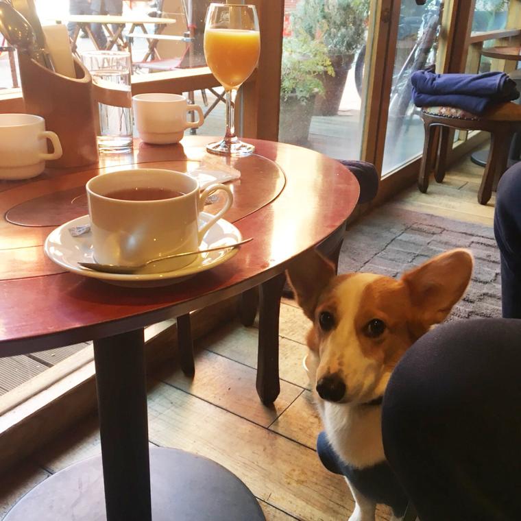 渋谷のドッグカフェ ペットokレストラン10選 ペトこと 犬 レストラン 大型犬