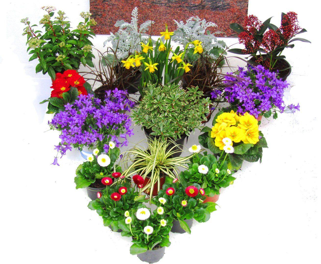 Balkonkasten Bepflanzen Ideen Plants Garden Garden Landscaping