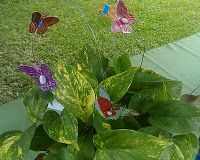 I show you how to make these dainty staked butterflies made from soda cans