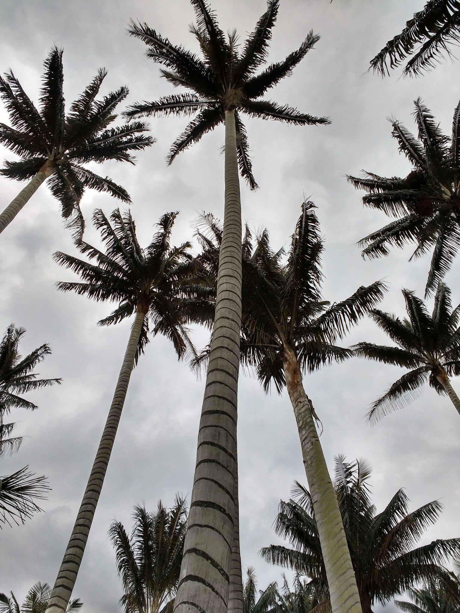 palms.jpg - Palm trees
