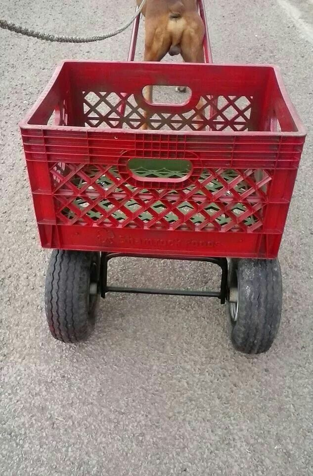 Diy Dog Cart This Is From Recycled Parts An Old Crate The Rear