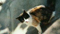 How To Keep Stray Cats Out Of Your Yard Cuteness Cat Crying Feral Cats Cats