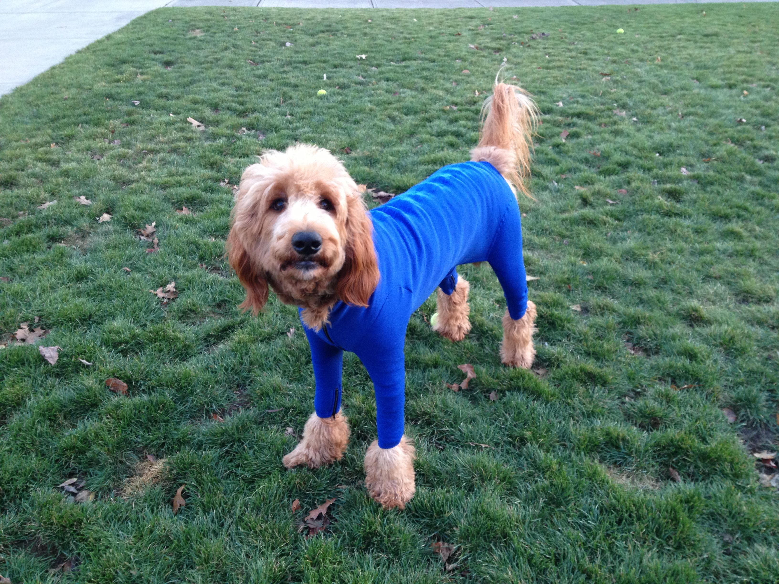 Dogs In Clothes What Could Be Better Ralph In A Snowsuit Of