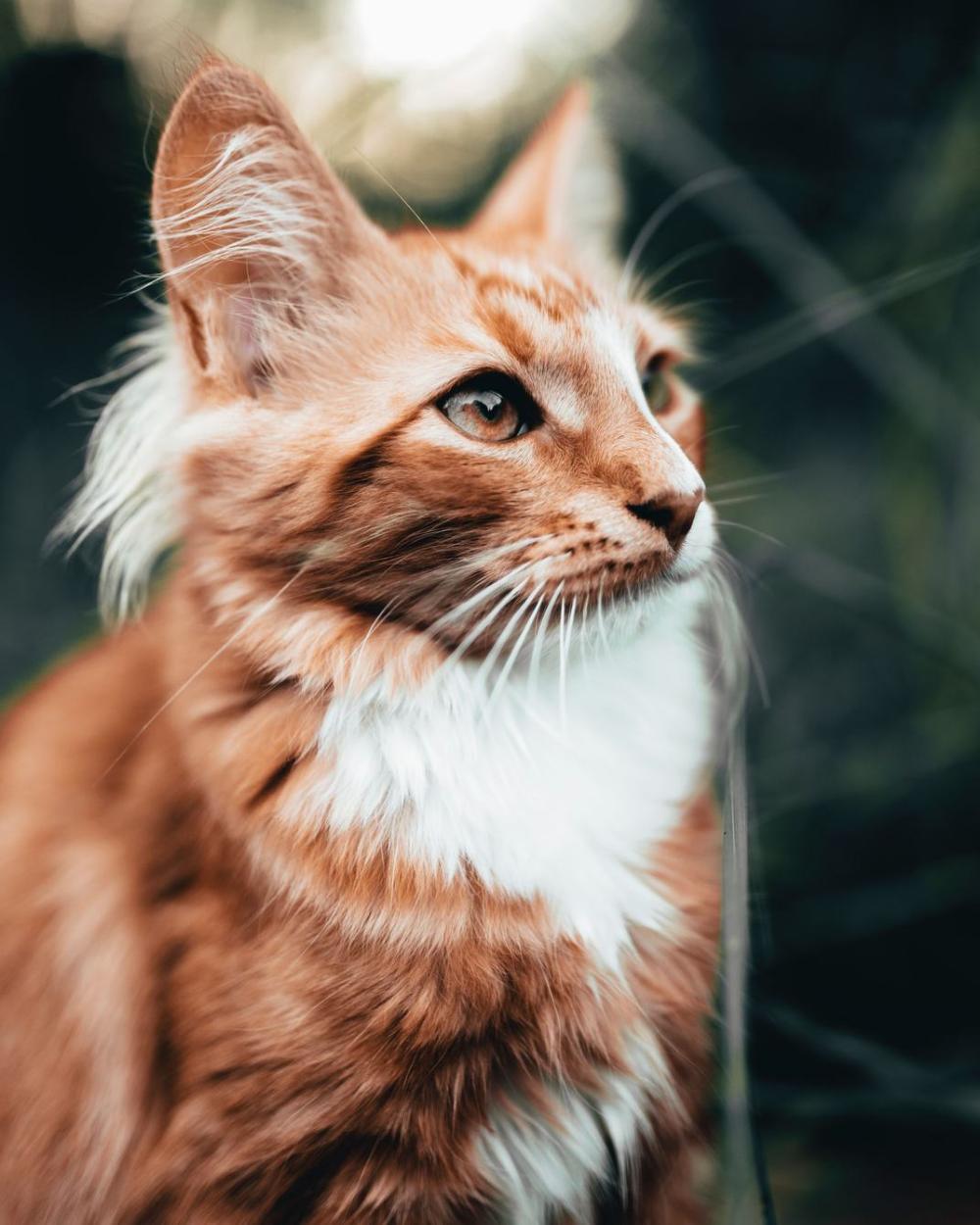 4k Cat Phone Wallpaper Most Beautiful Cat Breeds Animals Cat Pics