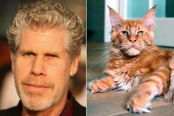 17 Cats That Look Like Celebrities Cats Funny Cats Funny Animals