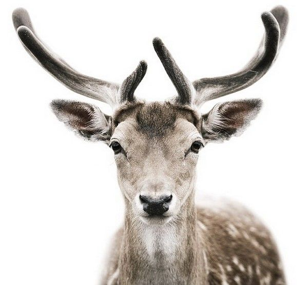 Wild Animals By Morten Koldby Via Http Www Pluspets Net Wild Animals Morten Koldby Tiere Wild Haustierfotos Tiere