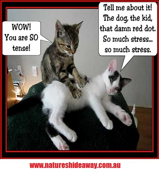 Purfffect Massage At Natures Hideaway Day Spa In Perth Http Natureshideaway Com Au Purfffect Massage Cat Massage Massage Funny Funny Animal Pictures