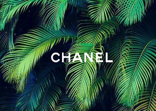. trees  #summer -  #palms,  #chanel