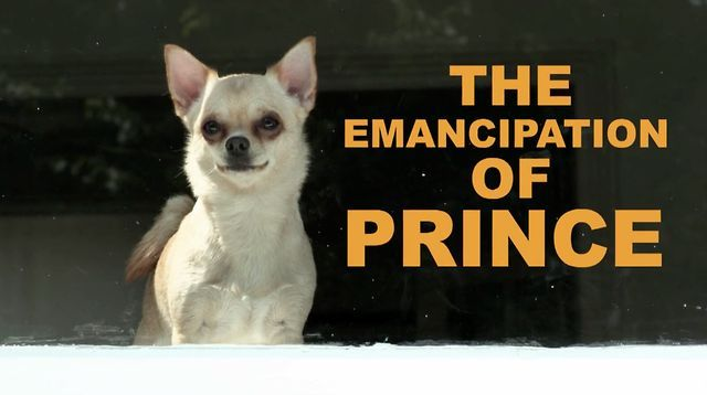 The Emancipation of Prince - a short film directed by Gavin O'Grady by Forever. Short film about a precocious Chihuahua called Prince who wants a new owner.