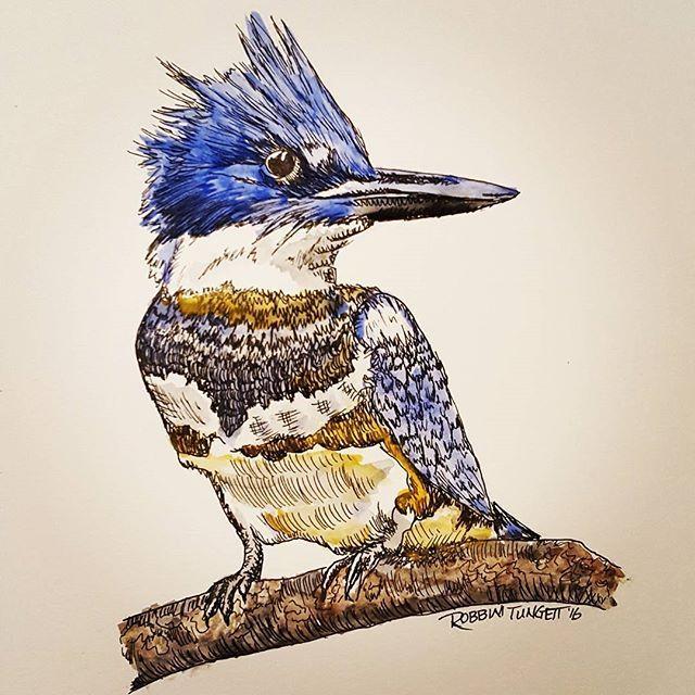 Kingfisher #sistersdraw #kingfisher #bird #drawing #ink # ...