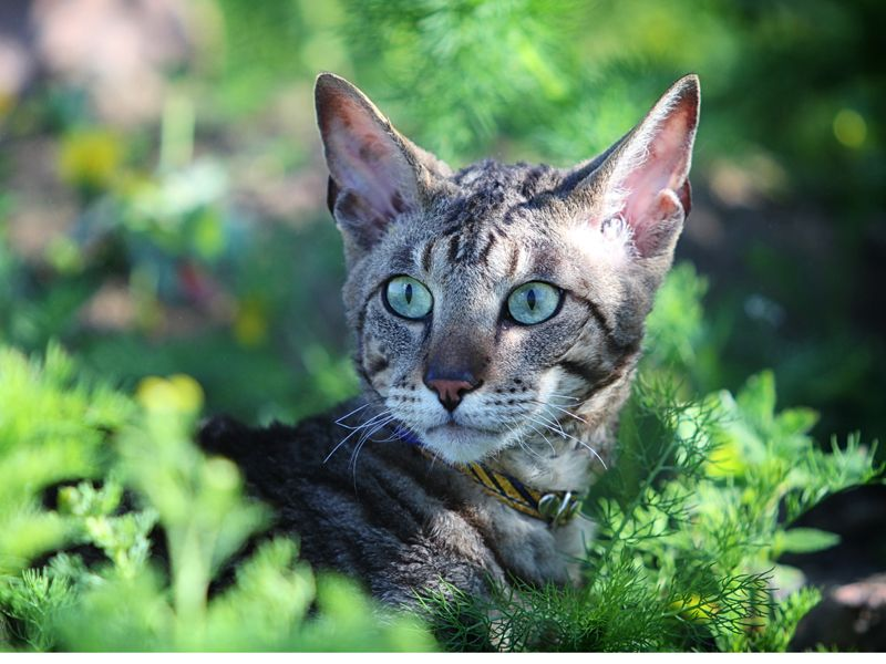 Liste Der Fur Katzen Giftigen Pflanzen Giftige Pflanzen Katzen Katzengras