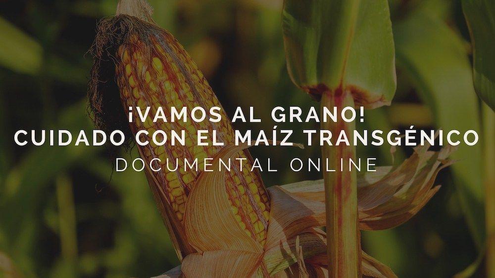 Documental recomendado: Vamos al grano. Cuidado con el maíz transgénico.