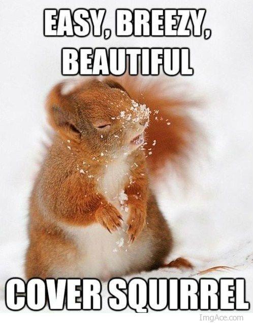 HAHAHAAA!!! #coversquirrel