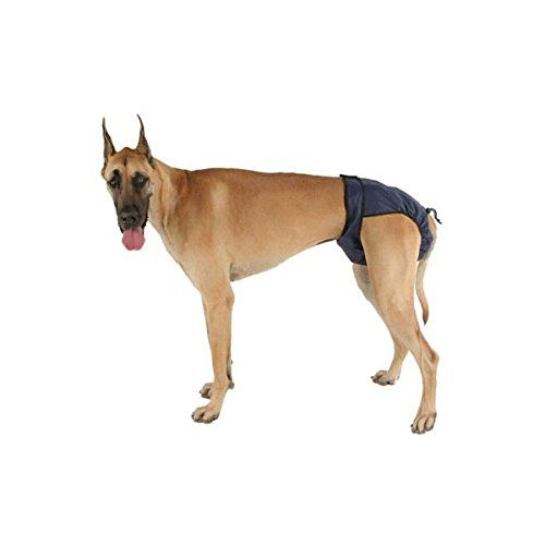 Understanding The Dog Heat Cycle Stages Signs Dog Diapers