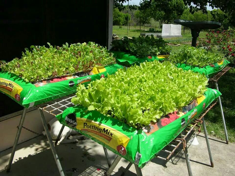 Plant lettuce directly into bag of soil (raise off the