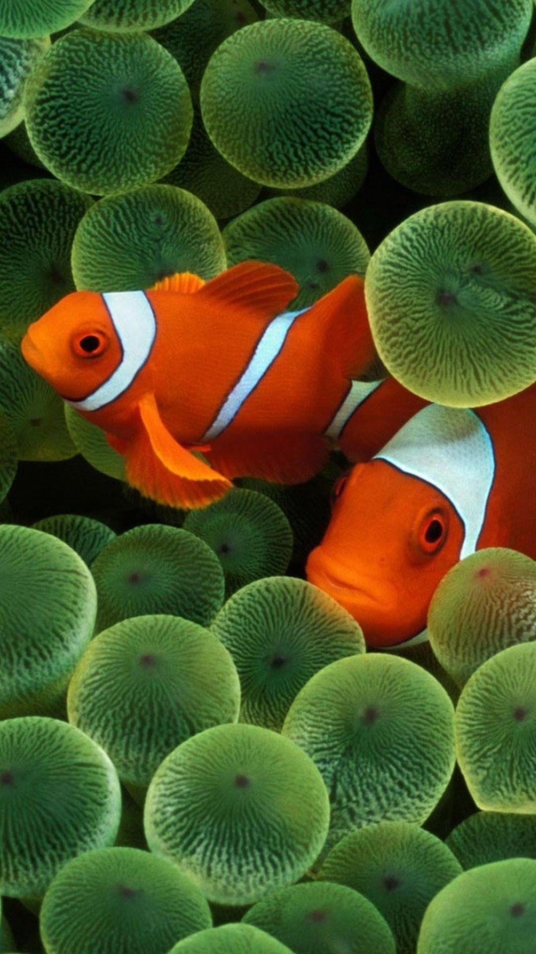 Wallpaper iphone nemo - Marlin And Nemo 1080x1920