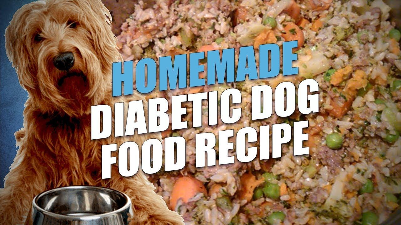 Homemade Diabetic Dog Food Recipe Cheap And Healthy Youtube