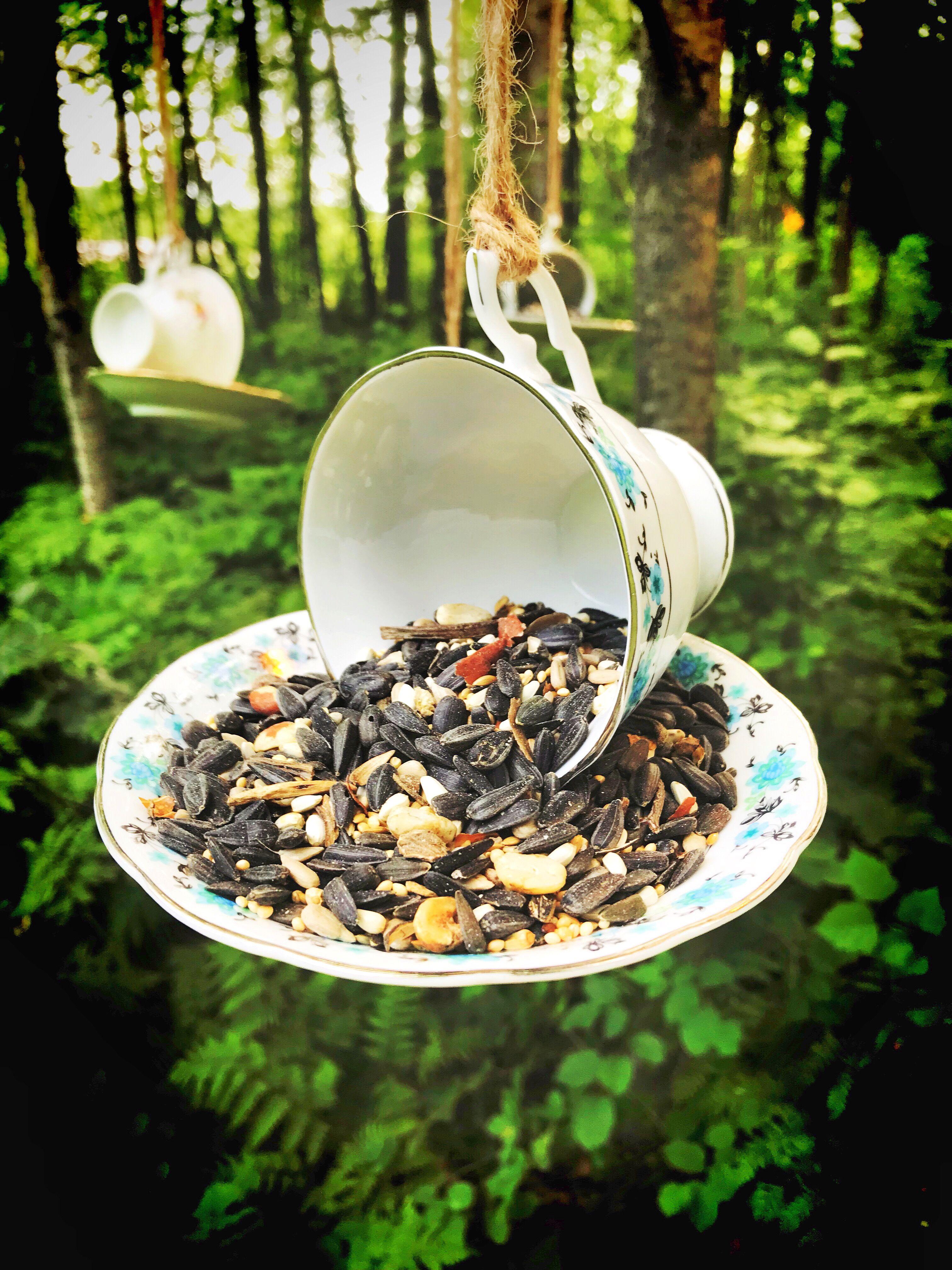 Tea cup bird feeders (With images) Tea cup bird feeder