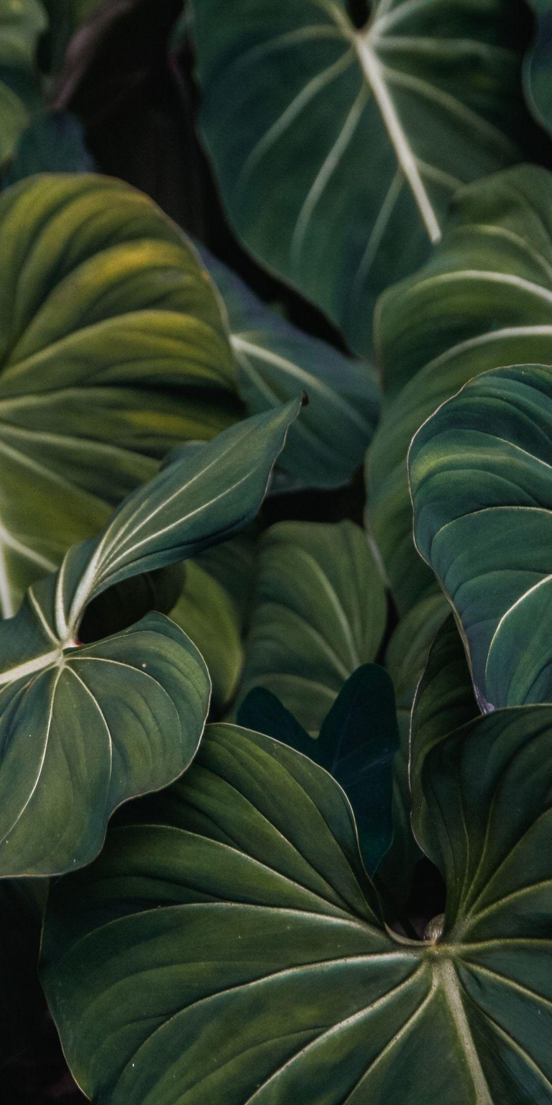 Flora, green leaf, veins, close up, 1080x2160 wallpaper