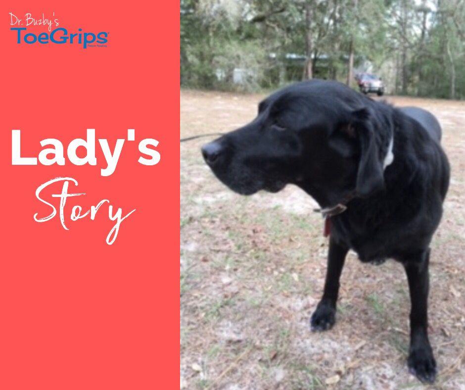 Lady S Story Dog Help Pet Parent Dogs