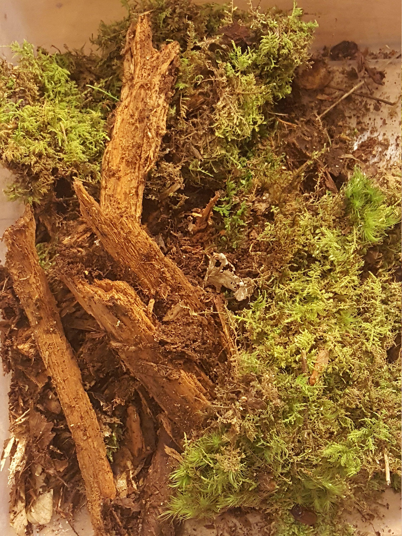 Rotting Wood Moss 1 Quart Bag Microflora Bioactive Terrarium