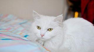 Nama Kucing Betina Yg Lucu Betina Yang Bagus Di Jepang Jepun Islam Putih Kucing Comel Senarai Nama Kucing Jantan Kucing Betina Kucing Kucing Lucu