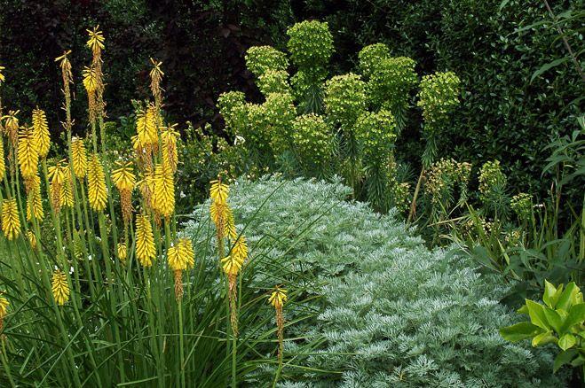 Kniphofia, Artemisia and Euphorbia