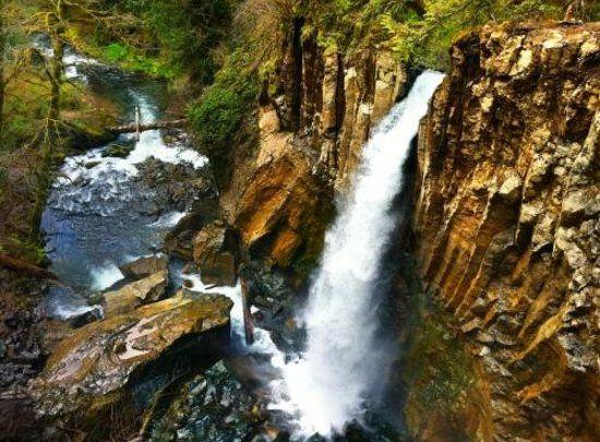 Photos Of Drift Creek Falls Trail Oregon Coast Attraction Images Tripadvisor Oregon Waterfalls Oregon Travel Oregon Hikes