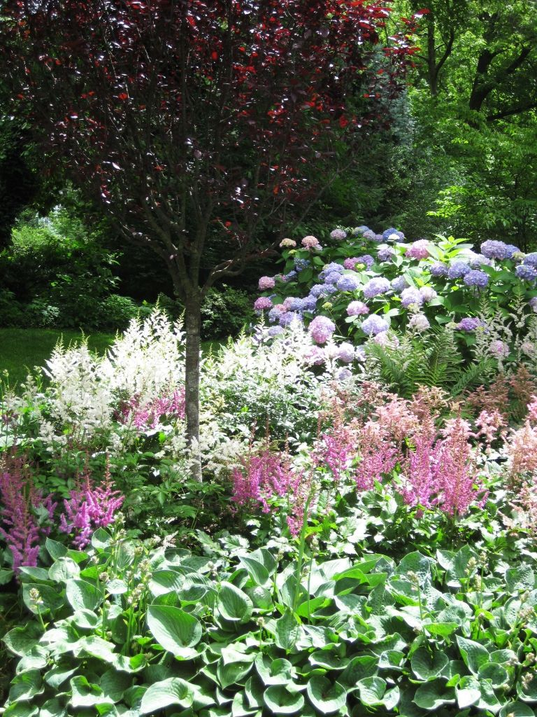 Shade garden plants - astilbe, hosta, hydrangea | garden | Pinterest on hosta and daylily garden, hosta and caladium garden, hosta garden plans blueprints, hosta and hydrangea garden,