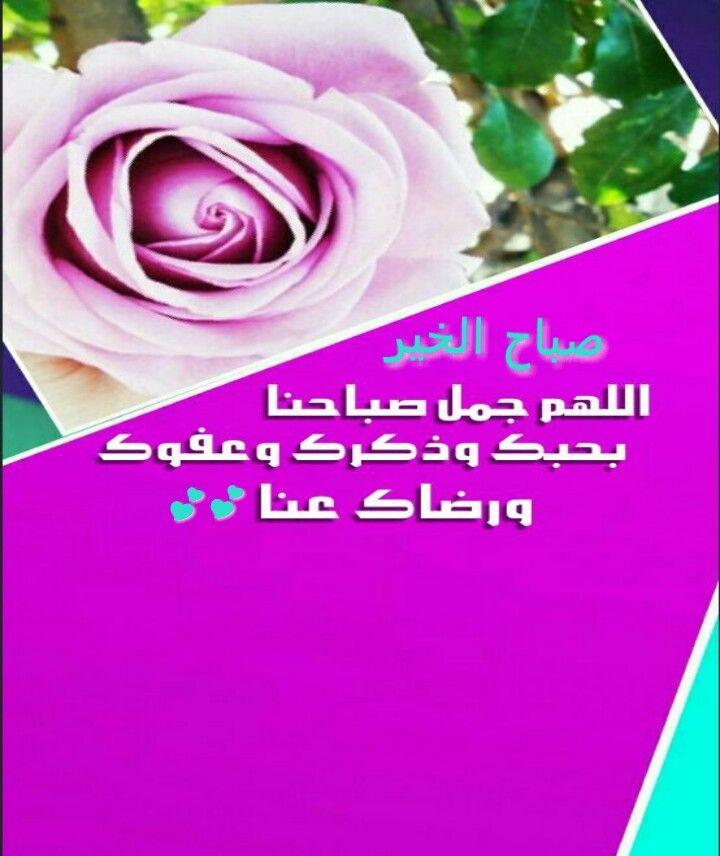 اللهم جمل صباحنا بحبك Rose Plants Flowers