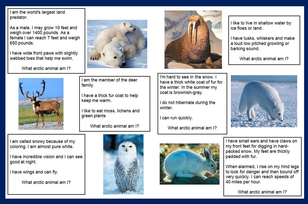 What Arctic Animal am I? File Folder Game Arctic animals