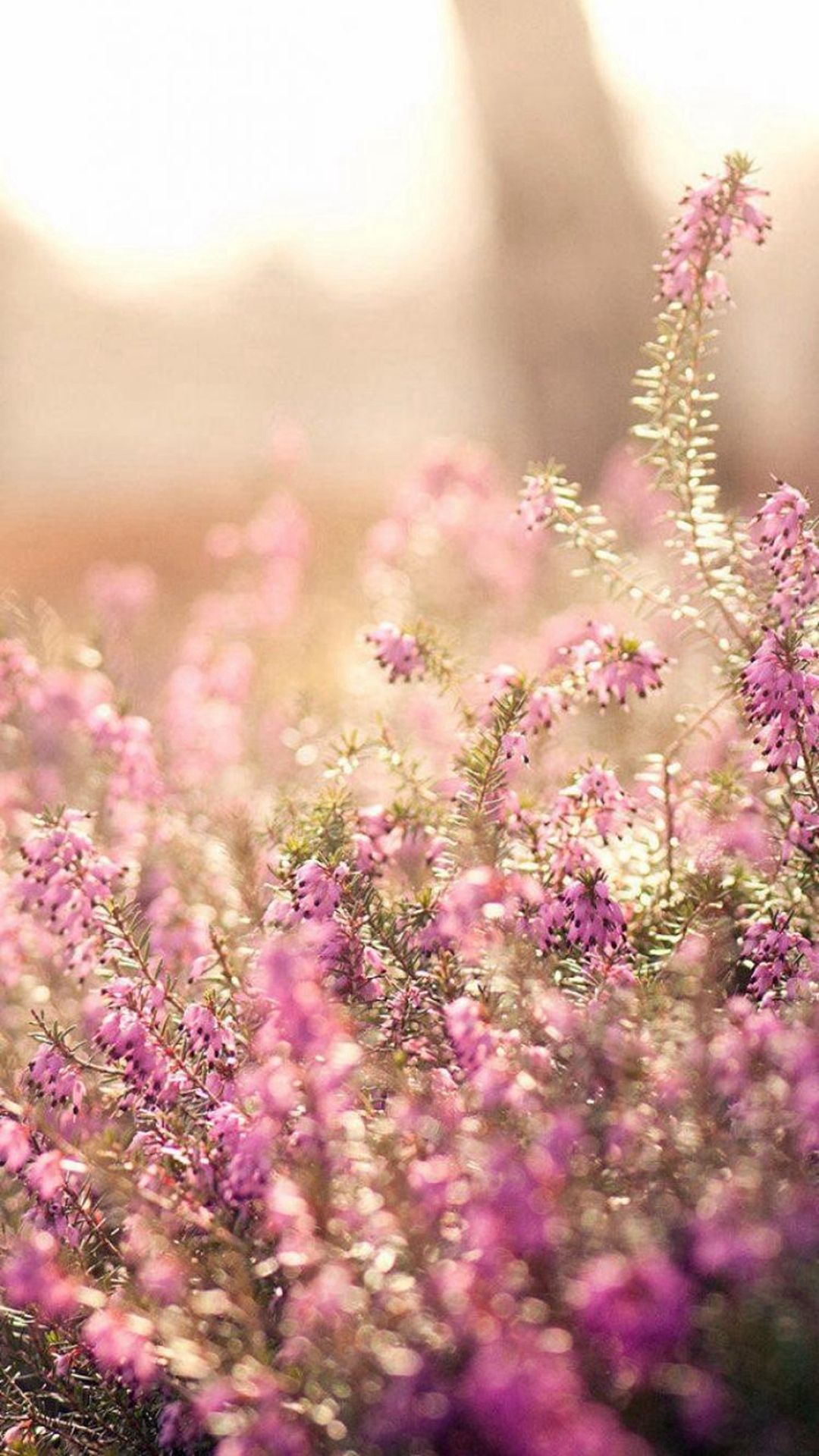 Nature Spring Bloomy Flowers Blurry IPhone 6 Wallpaper Download