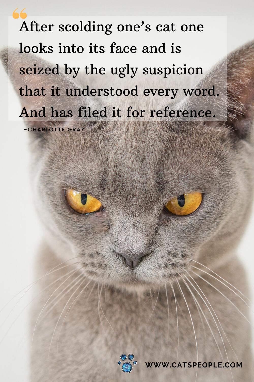 Funny Cat Cat Quotes Cats Funny Cats