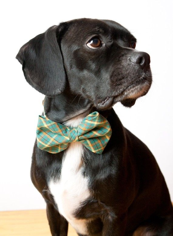 Reserved Teal Tartan Bow Tie Dog Collar Dog Collar Bow Tie Dog Bowtie Dog Tie