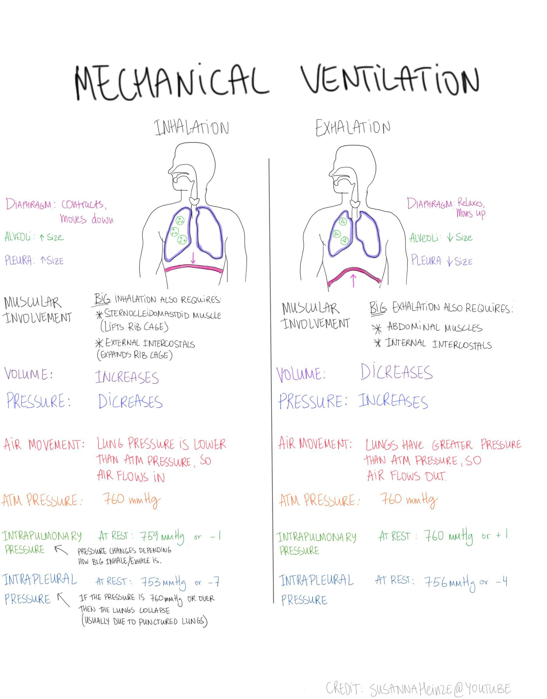 Mechanical Ventilation How We Breathe Volume Pressure