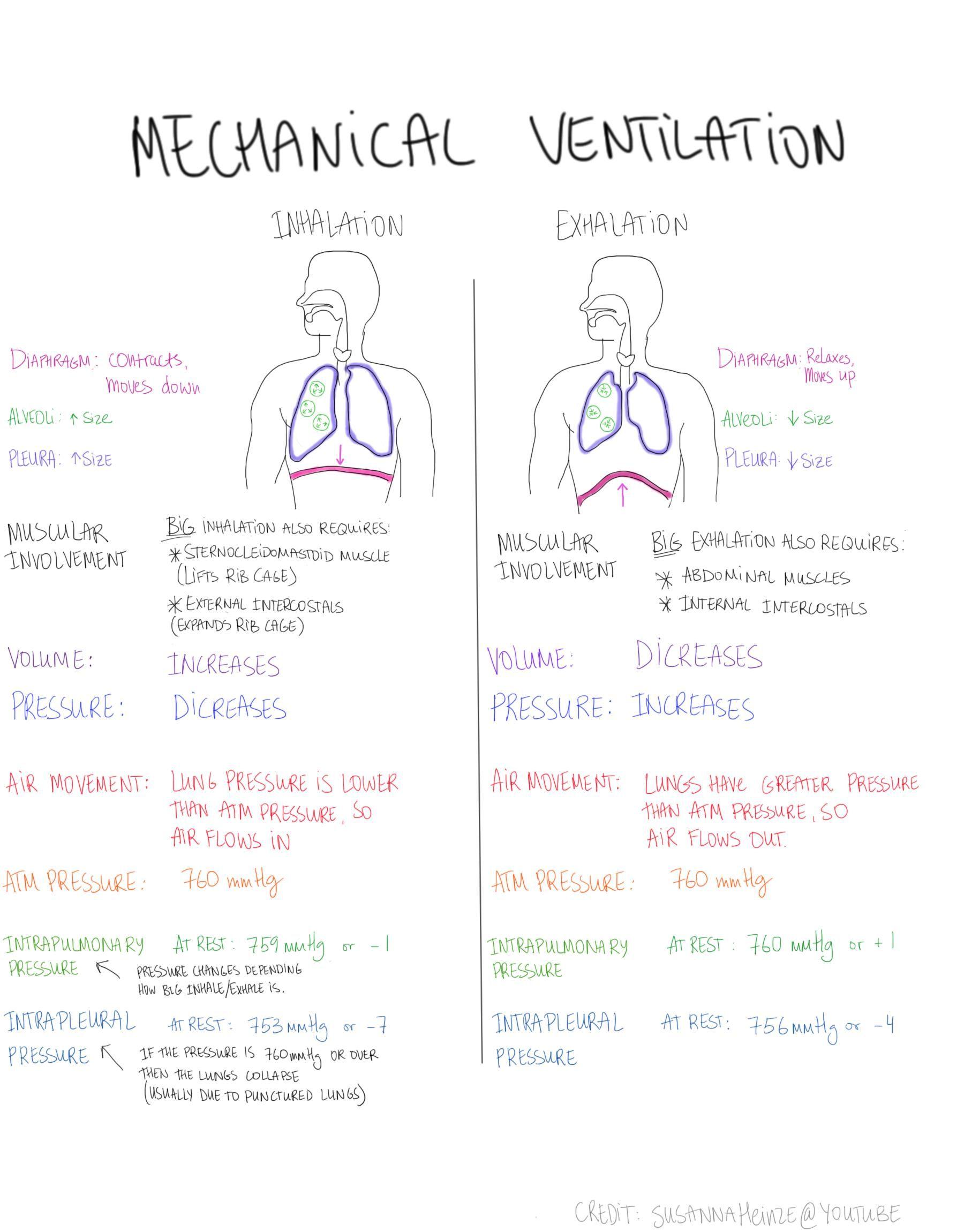 Mechanical Ventilation How We Breathe Volume Pressure