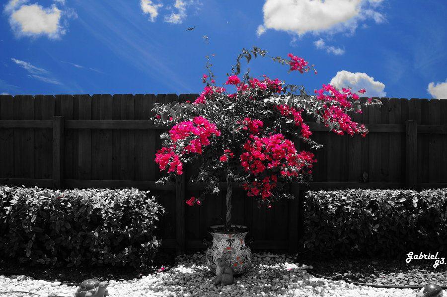 Garden by Gabriel Garcia, via 500px